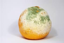 A mold.