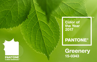 Footer-Image-Color-of-the-year-2017-Greenery-Pantone-